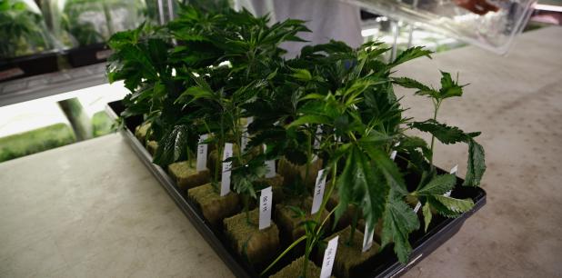 Auge en ventas de marihuana perjudicaría a otras industrias