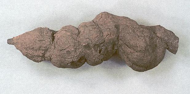 Heces fosilizadas revelan datos de nativos caribeños