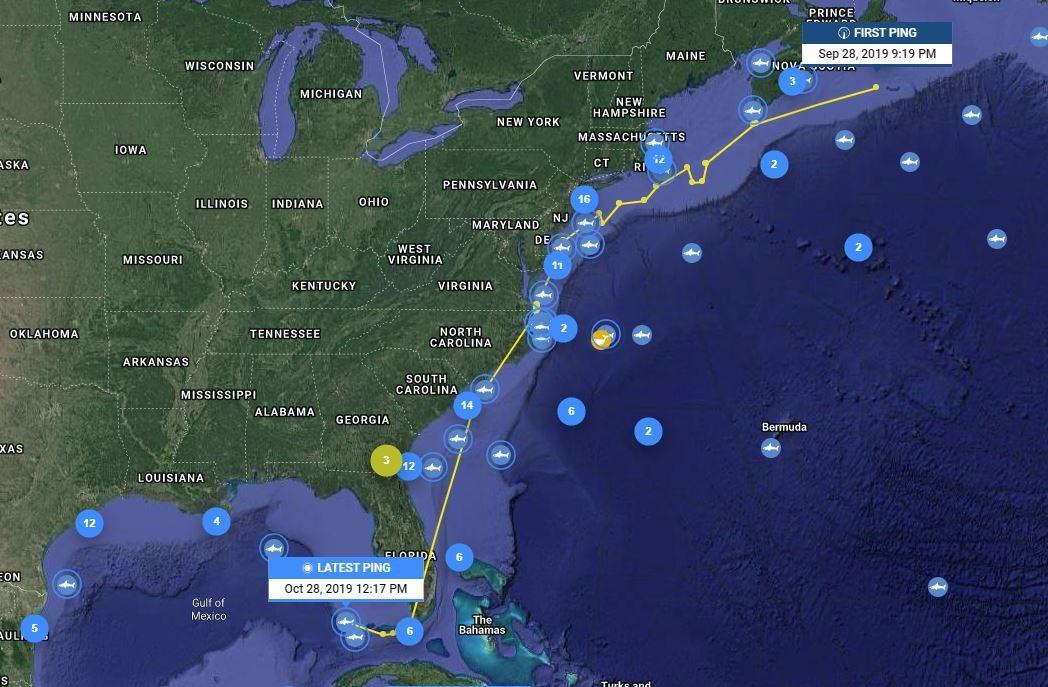 Enorme tiburón blanco nada en el Golfo de México