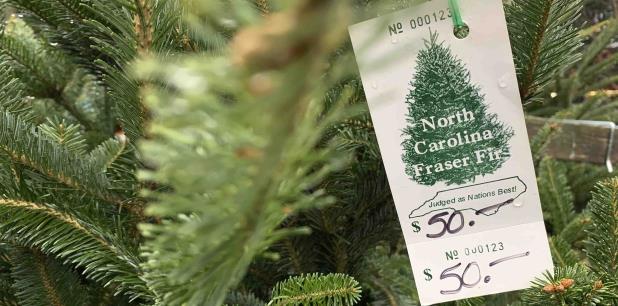 La búsqueda de un árbol de Navidad podría llevar más tiempo este año, indicaron funcionarios de la industria. (AP / Sarah Blake Morgan)